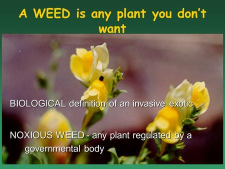 BIOLOGICAL definition of an invasive exotic NOXIOUS WEED - any plant regulated by a governmental body A WEED is any plant you don't want.