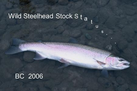 Wild Steelhead Stock S t a t u s BC 2006.... British Columbia in Perspective 1200 km (720 mi) south to north 500-1000 km (300 – 600 mi) wide 950,000 sq.