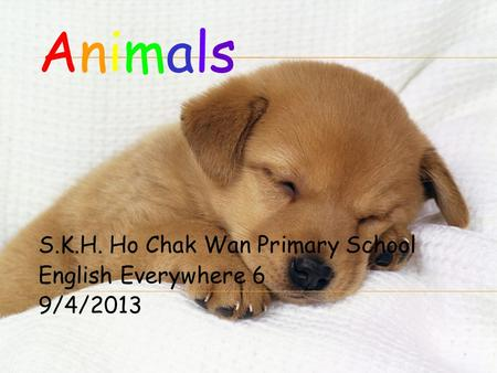 S.K.H. Ho Chak Wan Primary School English Everywhere 6 9/4/2013 AnimalsAnimals.