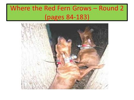 Where the Red Fern Grows – Round 2 (pages 84-183).