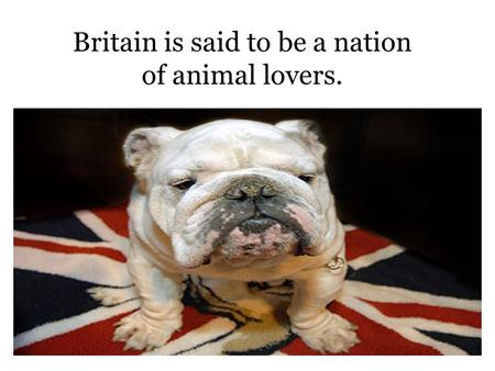 Britain is said to be a nation of animal lovers..