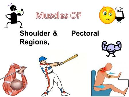 Shoulder &Pectoral Regions,. Objectives Identify the bony components of the shoulder girdle including the clavicle, scapula and humerus Describe how primary.