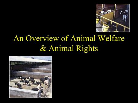 An Overview of Animal Welfare & Animal Rights. Overview Definitions Activists charges How producers can respond to activists views Setting the standards.
