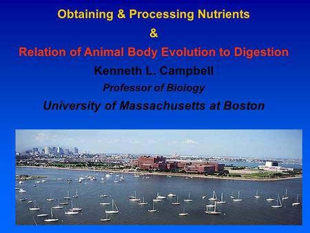 Obtaining & Processing Nutrients & Relation of Animal Body Evolution to Digestion Kenneth L. Campbell Professor of Biology University of Massachusetts.