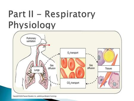  Pulmonary ventilation: air is moved in and out of the lungs  External respiration: gas exchange between blood and alveoli  Respiratory gas transport: