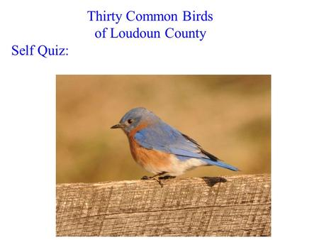 Thirty Common Birds of Loudoun County Self Quiz:.