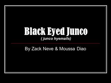 Black Eyed Junco ( junco hyemails) By Zack Neve & Moussa Diao.