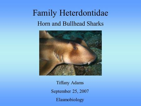 Family Heterdontidae Horn and Bullhead Sharks Tiffany Adams September 25, 2007 Elasmobiology.