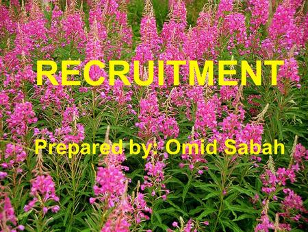RECRUITMENT Prepared by: Omid Sabah. Objectives : By the end of this chapter you will be able to:  Introduction to Recruitment  Constraints on Recruitment.