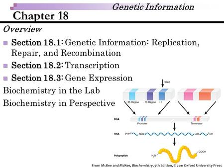 Chapter 18 Section 18.1: Section 18.1: Genetic Information: Replication, Repair, and Recombination Section 18.2: Section 18.2: Transcription Section 18.3: