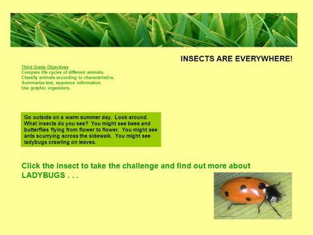 Click the insect to take the challenge and find out more about LADYBUGS... Go outside on a warm summer day. Look around. What insects do you see? You might.