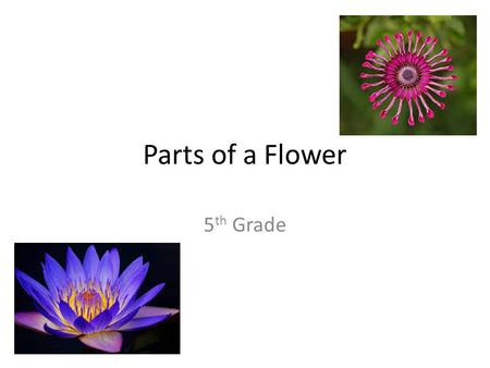 Parts of a Flower 5 th Grade. Parts of a Flower.