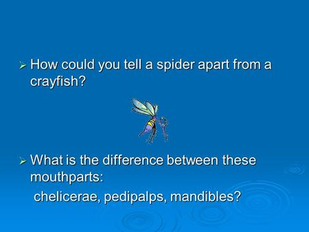 How could you tell a spider apart from a crayfish?