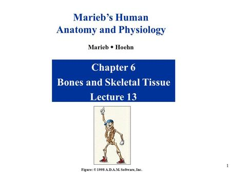 a p i skeletal lecture 1 Human anatomy home lecture notes and study guides markings and general skeletal bones study tables 61 and 62 and figure 71 quiz on.