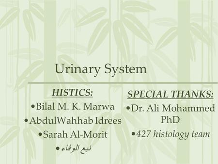 HISTOLOGY OF THE URETERS, URINARY BLADDER AND URETHRA ...