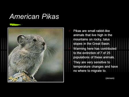 American Pikas Pikas are small rabbit-like animals that live high in the mountains on rocky, talus slopes in the Great Basin. Warming here has contributed.