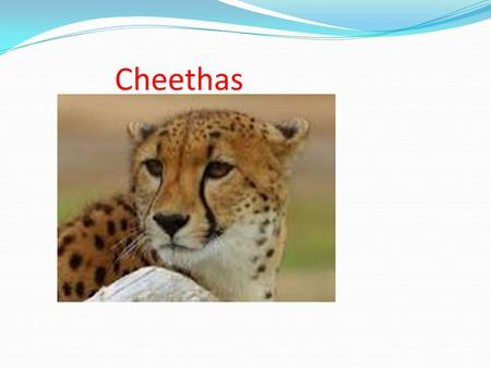 Cheethas. They live in Africa the Middle east and south America.