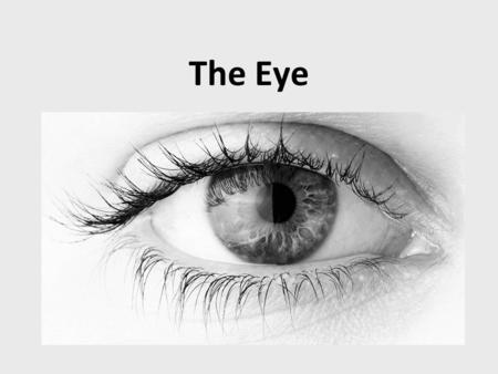 The Eye. Cross-section of an eye muscle optic nerve aqueous humour lens pupil iris cornea ciliary muscle vitreous humour blind spot retina sclera.