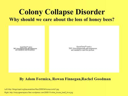 Colony Collapse Disorder Why should we care about the loss of honey bees? By Adam Formica, Rowan Finnegan,Rachel Goodman Left:http://blogs.kqed.org/bayareabites/files/2008/04/honeycomb1.jpg.