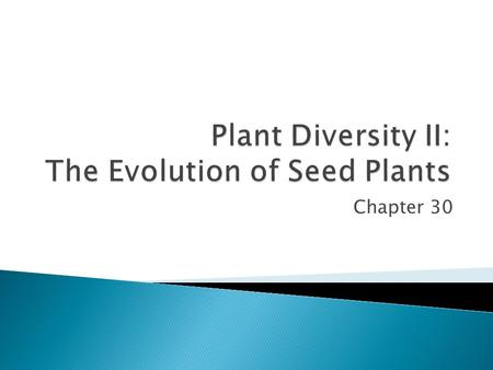 Chapter 30.  360 mya, seed plants evolved  13,000 years ago, humans began domesticating wheat, corn, rice, and bananas  The gametophytes of seed plants.