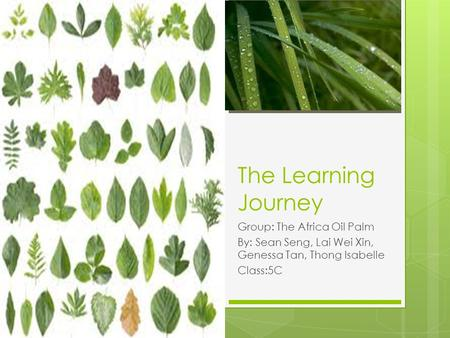 The Learning Journey Group: The Africa Oil Palm By: Sean Seng, Lai Wei Xin, Genessa Tan, Thong Isabelle Class:5C.