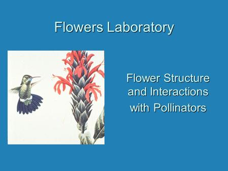 Flowers Laboratory Flower Structure and Interactions with Pollinators.