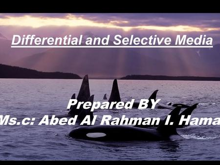 Differential and Selective Media Prepared BY Ms. c: Abed Al Rahman I