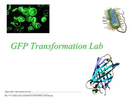 GFP Transformation Lab Images taken without permission from