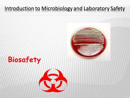 Biosafety.  NO FOOD OR DRINKS!  Wash hands thoroughly  Disinfect counters and work area  Tie hair back  Smock, apron, or lab coat optional  Gloves.
