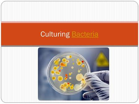 Culturing BacteriaBacteria. Lab Preparation In this lab you will be designing an experiment to test the effectiveness of a product that contains an antibacterial.