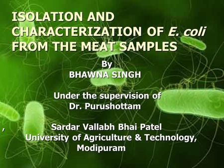 ISOLATION AND CHARACTERIZATION OF E. coli FROM THE MEAT SAMPLES By By BHAWNA SINGH BHAWNA SINGH Under the supervision of Under the supervision of Dr. Purushottam.