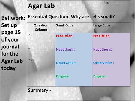 Agar Lab Page _________ Essential Question: Why are cells small? Question Column Small CubeLarge Cube L1 – L2 – L3 – Prediction: Hypothesis: Observation: