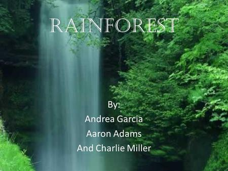Rainforest By: Andrea Garcia Aaron Adams And Charlie Miller.