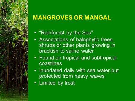 "MANGROVES OR MANGAL ""Rainforest by the Sea"""