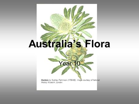 Australia's Flora Year 10 Banksia by Sydney Parkinson (1759-68). Image courtesy of National History Museum, London.
