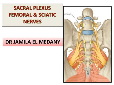 DR JAMILA EL MEDANY. OBJECTIVES By the end of the lecture, students should be able to:  Describe the formation of sacral plexus (site & root value).