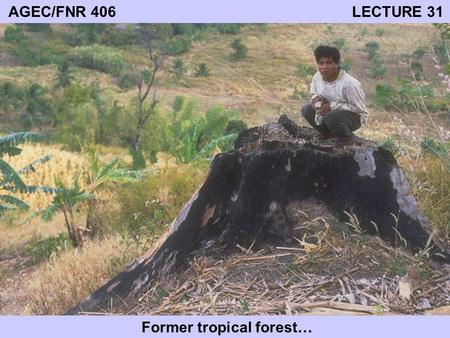 AGEC/FNR 406 LECTURE 31 Former tropical forest…. TROPICAL FORESTS Located between tropics of Capricorn and Cancer At least 10 percent woody cover Important.