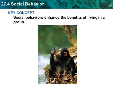 Living in groups also has benefits and costs.