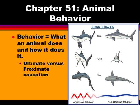 Chapter 51: Animal Behavior l Behavior = What an animal does and how it does it. Ultimate versus Proximate causation.