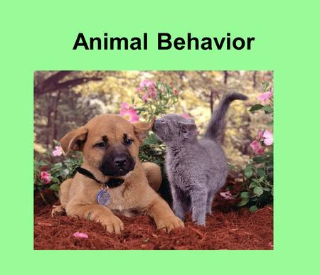 Animal Behavior. Behavior · Behavior is the way an organism interacts with other organisms and its environment. ·Some behaviors are learned, while others.