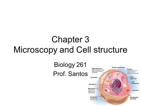 Chapter 3 Microscopy and Cell structure Biology 261 Prof. Santos.
