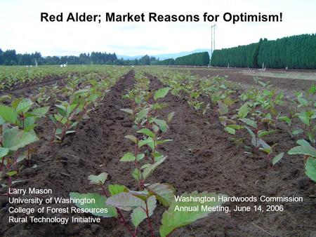 Red Alder; Market Reasons for Optimism! Larry Mason University of Washington College of Forest Resources Rural Technology Initiative Washington Hardwoods.