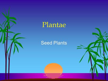 Plantae Seed Plants. Vascular Plants l Formation of vascular tissue –Xylem (water) –Phloem (food) –True leaves, roots, and stems l Lignin l Sporophyte.