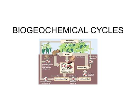BIOGEOCHEMICAL CYCLES. The flow of energy in the biosphere is in one direction only: from the sun, through living organisms, into the environment, and.