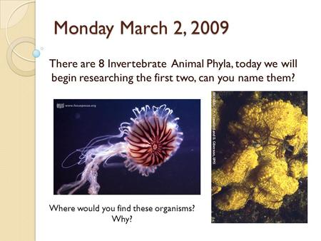 Monday March 2, 2009 There are 8 Invertebrate Animal Phyla, today we will begin researching the first two, can you name them? Where would you find these.