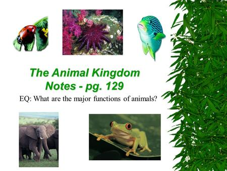 The Animal Kingdom Notes - pg. 129 EQ: What are the major functions of animals?