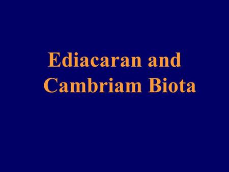 Ediacaran and Cambriam Biota. Late Proterozoic Buildup (about 570 mya) For all of the 19th century and the first half of the 20th century, the Proterozoic.