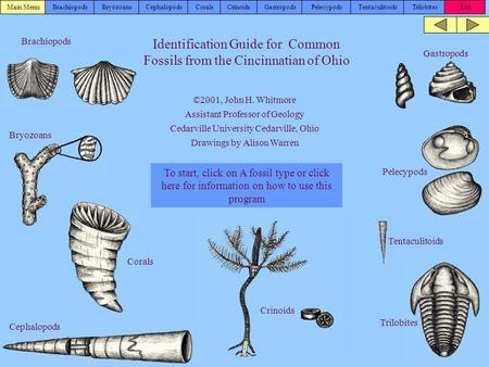 Brachiopods Identification Guide for Common Fossils from the Cincinnatian of Ohio To start, click on A fossil type or click here for information on how.