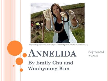 A NNELIDA By Emily Chu and Wonhyoung Kim  Segmented worms.
