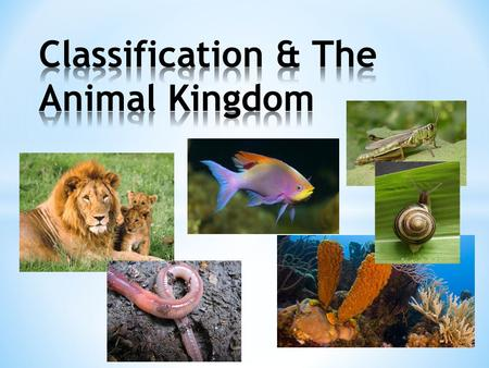Classification & The Animal Kingdom